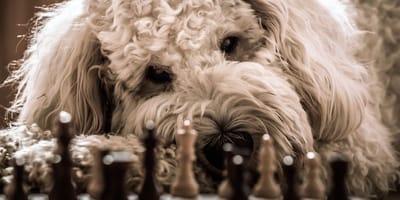 giochi-di-intelligenza-per-cani