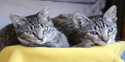 Gatto maschio o femmina: cosa scegliere?