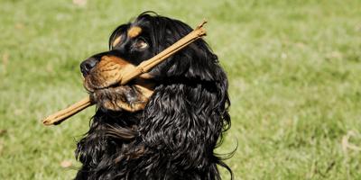 giocare-con-il-cane
