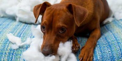 ansia-da-separazione-nel-cane