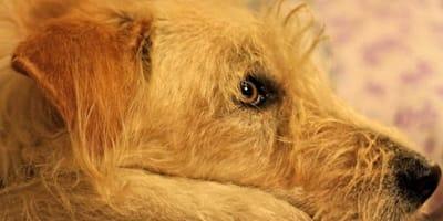 rogna-cane-cura-naturale