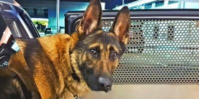 ¡El perro policía que se ha convertido en el ídolo de su país!