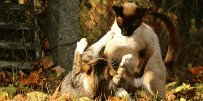 Everything you need to know about FIV cats