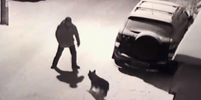 Russland: Mann will Hund treten, doch das bereut er sofort!