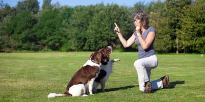 Szkolenie psa za pomocą gwizdka