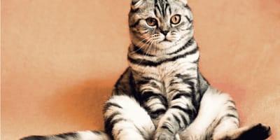 grey cat with orange eyes