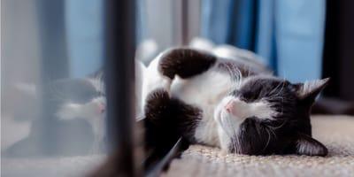 4 house cat breeds