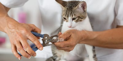 Katzenkrallen schneiden: So funktioniert es