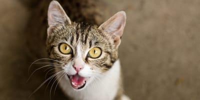 Miau: Das will die Katze dir wirklich sagen