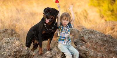 10 najpopularniejszych ras psów obronnych