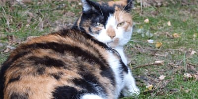 How to care for a pregnant cat?