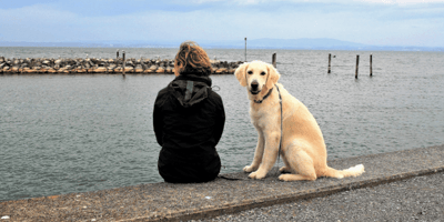 Golden Labrador next to owner sat by the sea