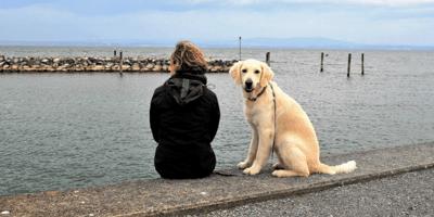 un-labrador ed-una-donna- seduti-vicini-di-fronte-al-mare