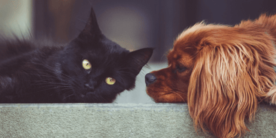 black cat and his friend brown dog