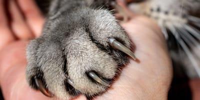 Choroba kociego pazura: objawy i leczenie