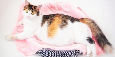 Ile trwa ciąża kota i jak rozpoznać, że kotka jest w ciąży?