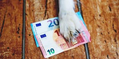 hundepfote auf 20 und 10 euro schein