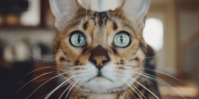 Psst, here are 5 facts about cats you probably didn't even know!