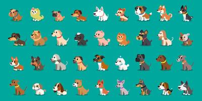 Welcher Hund passt zu mir? Welche Rasse ist ideal für mich?