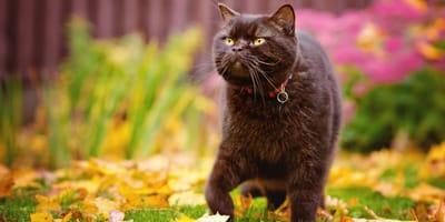 Czy obroża dla kota może być niebezpieczna?