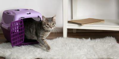 Katzentransportbox kaufen: Worauf man achten sollte