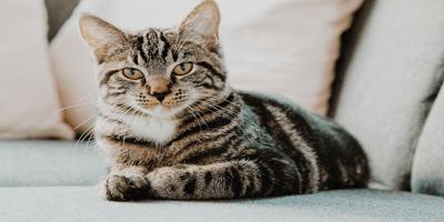 grey cat sat on the sofa