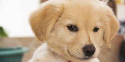 8 cosas que tu cachorro quisiera que dejaras de hacer