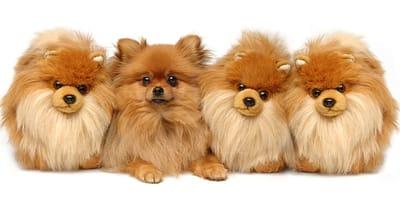 Los 5 motivos por los que adoptar un perro pequeño
