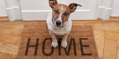 Dom tymczasowy dla psa