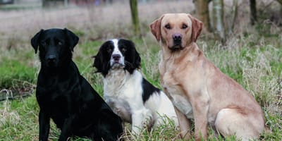 razas de perros amistosas con otros perros