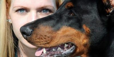 razas de perro guardian