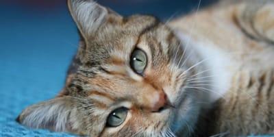 Portano il gatto dal veterinario e quello che gli annuncia è di una crudeltà unica