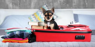 Kleiner Hund im Koffer auf dem Bett