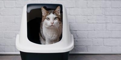 7 best cat litter boxes
