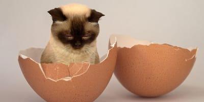 small kitten sat in an egg shell