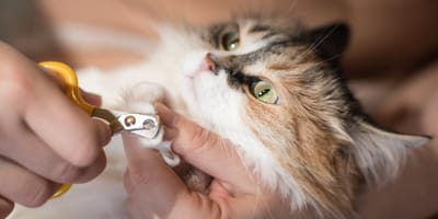 10 best cat claw clippers