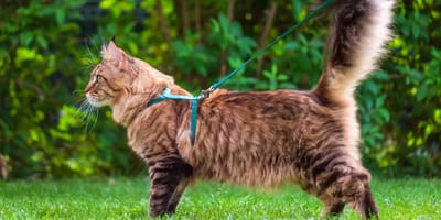 Everything you need to know about cat leash