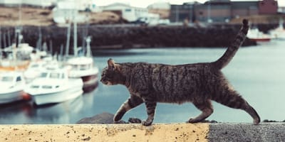 Everything you need to know about travelling with a cat