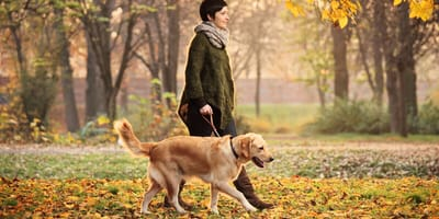 Jakie obowiązki ma każdy właściciel psa?