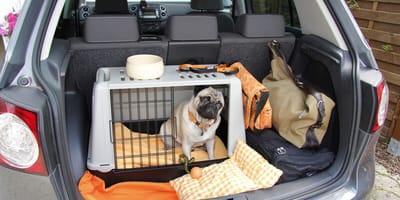 Klatka transportowa dla psa