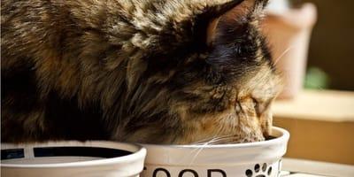 Dieta BARF gatto: cos'è e come realizzarla