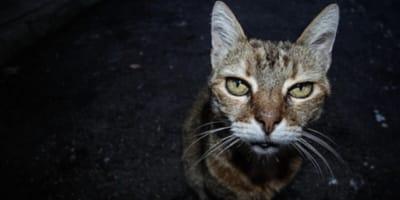 Gatto anziano mangia ma dimagrisce: cause e diagnosi