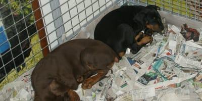 Prohibir la venta de perros