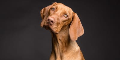 como educar a mi perro metodos