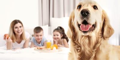 Pies przyjacielem rodziny