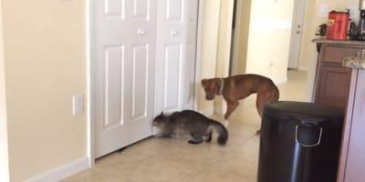 hund und katze vor schranktür