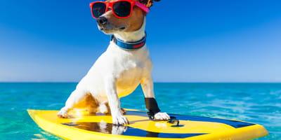 Potcake Place: ¡la isla paradisiaca para perros!