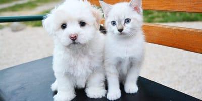 homeopatia animales