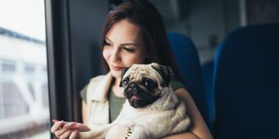 Podróż pociągiem z psem – praktyczne porady