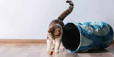 7 najlepszych zabawek dla Twojego kota. Sprawdź nasze propozycje!